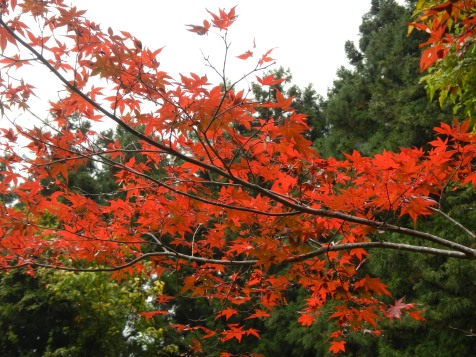 Do the amazing maple leaves ever stop?!
