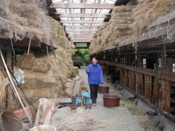 Tomoko in the barn