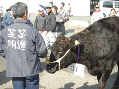 Mt Watanabe with his cow at the cattle show