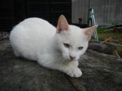 The family's newest feline member: Hanako-chan