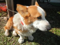 The family's dog: Kouta-kun