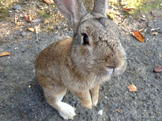 Okunoshima: The Rabbit Island