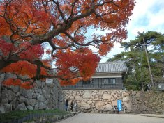 Maple greeting at Matsue Castle