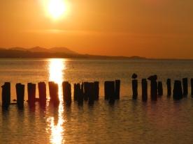 Ducks roosting at sunset (Lake Shinji, Matsue)