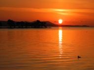 Duck and sunset (Lake Shinji, Matsue)