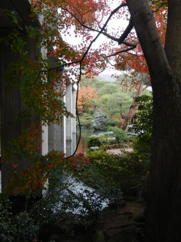 Pretty maple with concrete backdrop (Adachi Museum of Art)