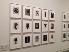 Incredible macro photography of plants by Karl Blossfeldt at the Shimane Art Museum