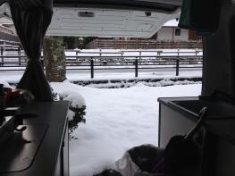 Good morning snow! (Koyasan)