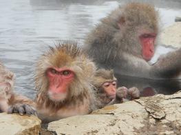 Cute baby monkey alert!