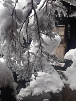 Snow-laden branch