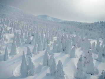 Snow monsters of Zao