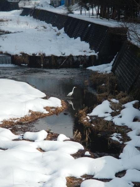 Heron on a snowy riverbank