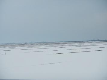 Snow covered rice paddies (Yamagata pref)