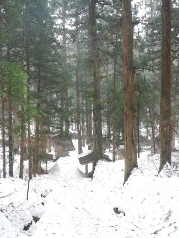 Haguro-san forest (Yamagata pref)