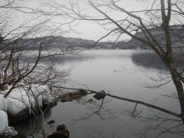 Swans on the lake (Lake Towada, Aomori)