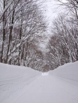 Snow walls in Akita
