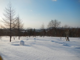Sunny morning looking out from the house (Kurikoma Kougen Nature School)